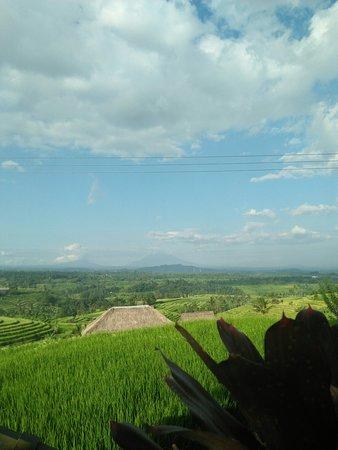 Jatiluwih, Indonezja: Ke indahan sawah