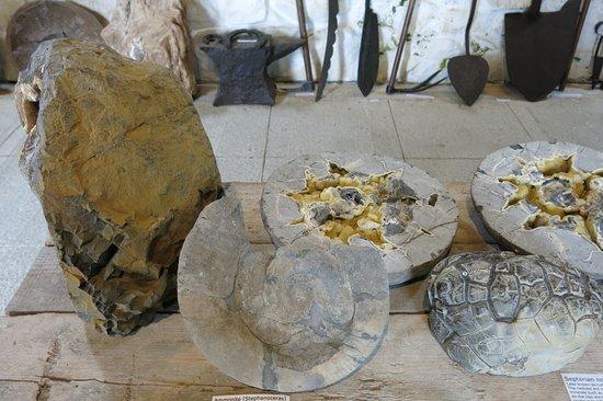 Staffin, UK: Ammoniten