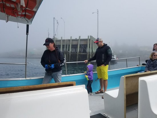 Freeport Whale & Seabird Tours: great day of sealife watching