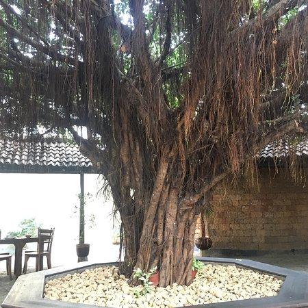 Gurudeniya, Srí Lanka: photo8.jpg