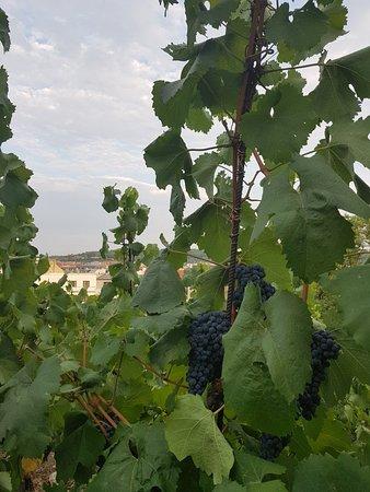Grebovka Wine Cellar