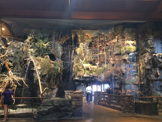Bass Pro shop display wall in Springfield MO  - Picture of Bass Pro