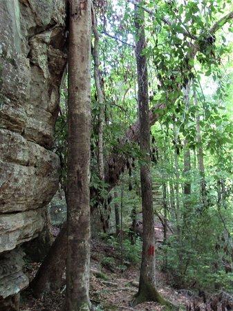 Tishomingo, Μισισιπής: Hiking trail passed the waterfall