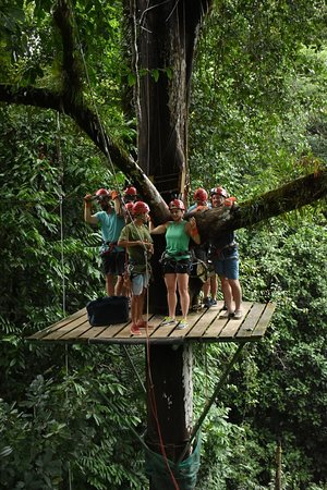 Canopy Safari صورة