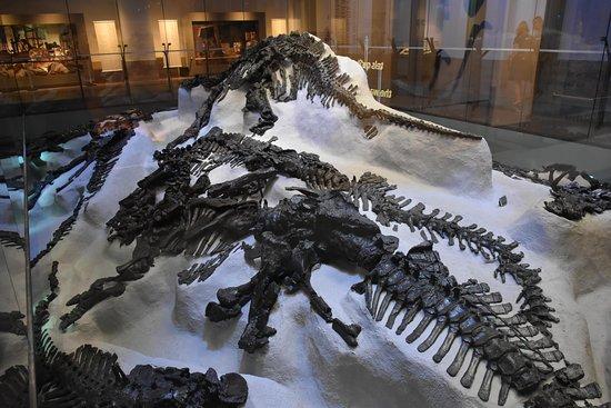 zo werden de iguanodons gevonden diep onder de grond in de mijn van
