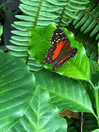 Butterflies oh my