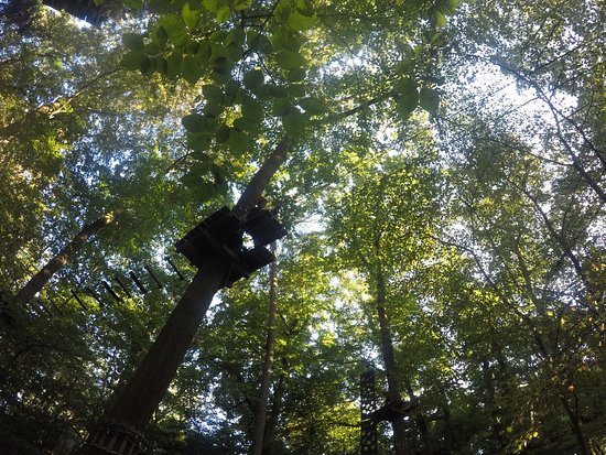 Wetzlar, Allemagne : Climbing at different levels intoxicated with the smell of pine