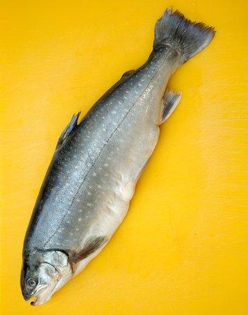 Tivoli, Estado de Nueva York: Selection of fresh fish