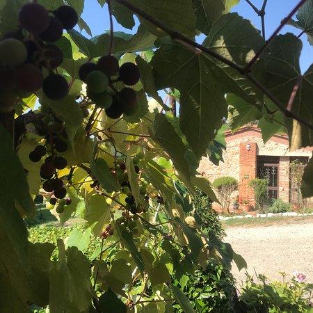 Country Inn Casa Mazzoni: photo7.jpg