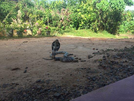 Snake Farm: Cobra!!!