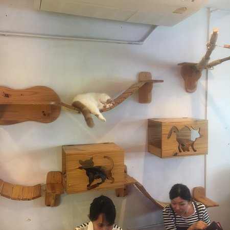 Caturday Cat Cafe Review
