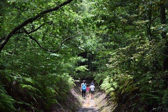 Pension Ashitanomori: Walking the Kumanokodo
