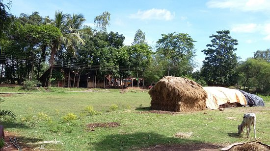 Indian village West-Bengal (India) - Picture of Ravi India