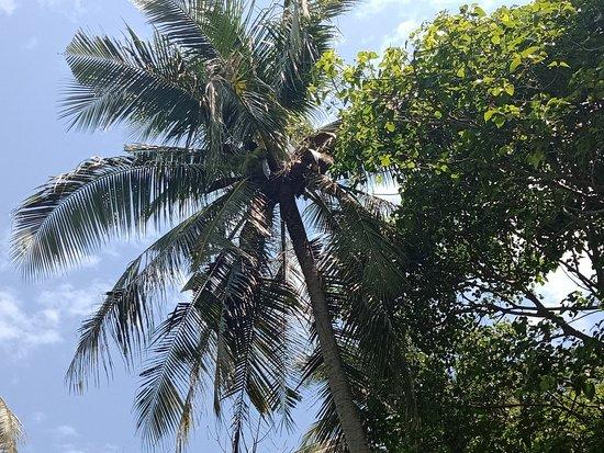 Phuket (miasto), Tajlandia: IMG20180716133719_large.jpg