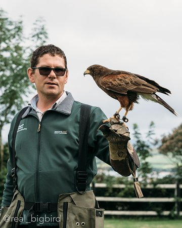 Milltown, Irland: Dingle Falconry