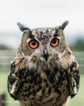 Milltown, Irland: Dingle Falconry