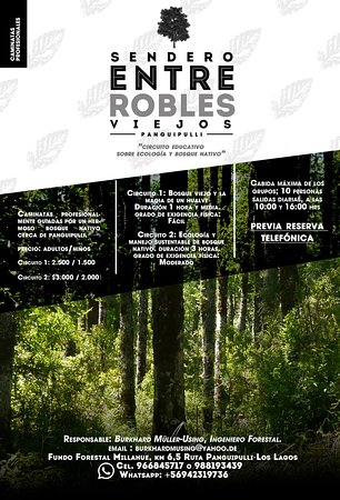 Entre Robles Viejos-Fundo Forestal Millahue