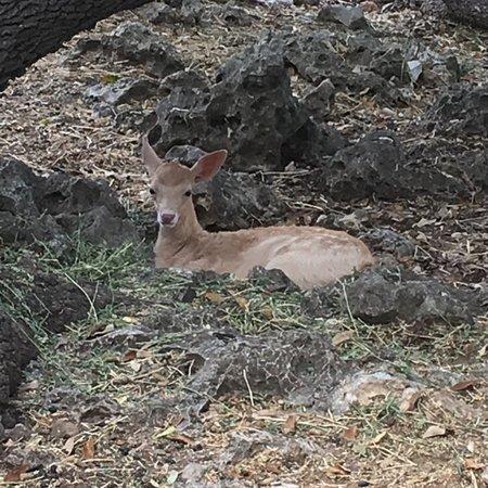 Natural Bridge Wildlife Ranch 사진
