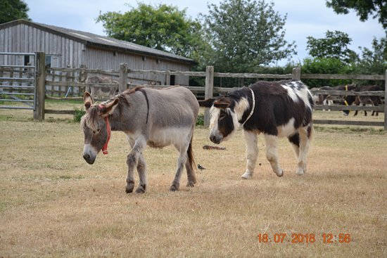 The Donkey Sanctuary: Best friends ?