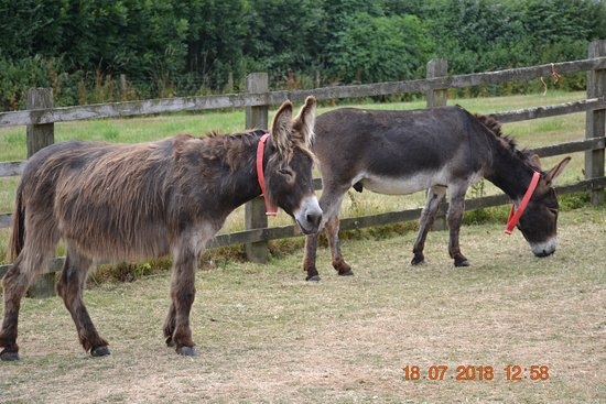 The Donkey Sanctuary: Constant companions