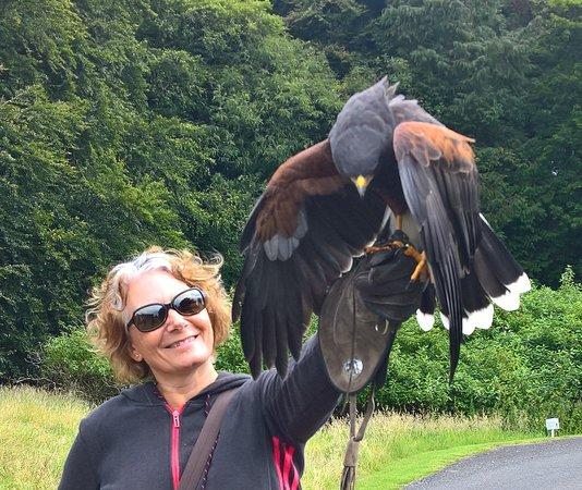 Blackford, UK: Kane the Harris Hawk with author Karen Turner.