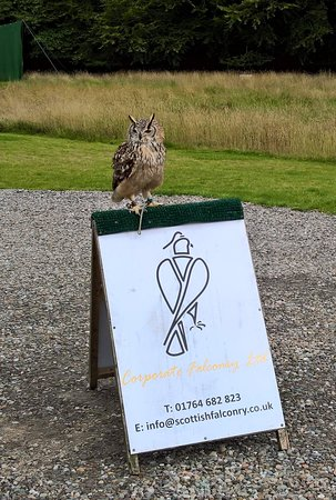 Blackford, UK: This owl knows from where his next meal is coming.