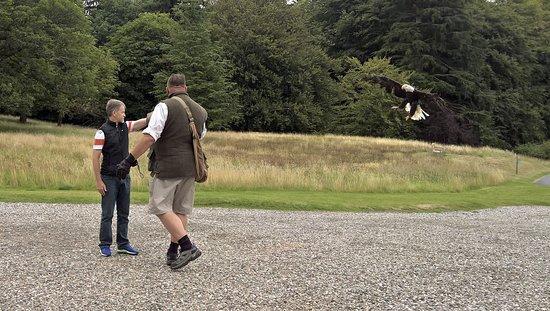 Blackford, UK: Caution; Bald Eagle approaching.