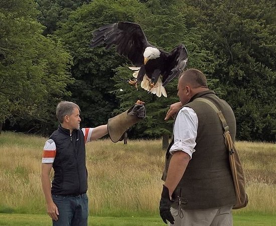 Blackford, UK: The eagle has landed...almost.