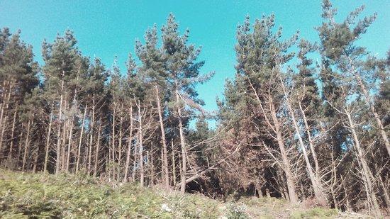 Мыс Финистерре, Испания: Bajo el bosque