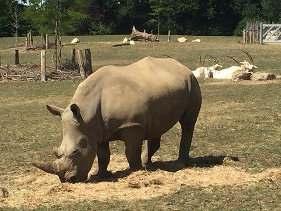 Marwell Zoo Photo