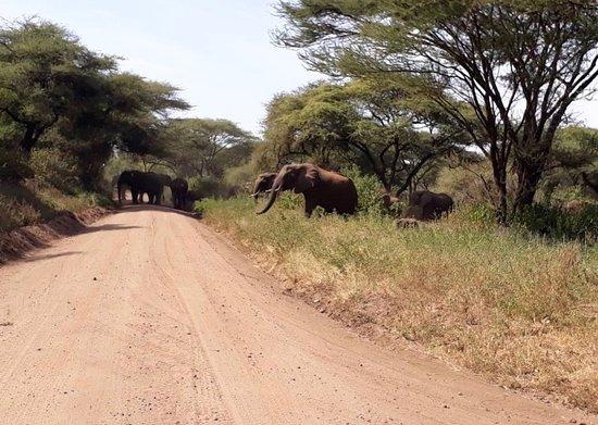 Моши, Танзания: elephant
