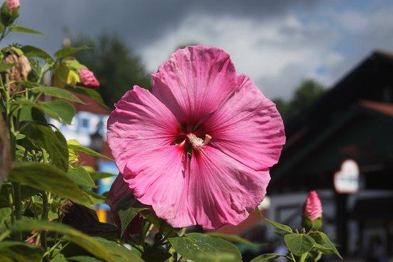 Norfolk Botanical Garden: Color Pink