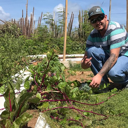 Noord, Aruba: Goshen Sustainable Development