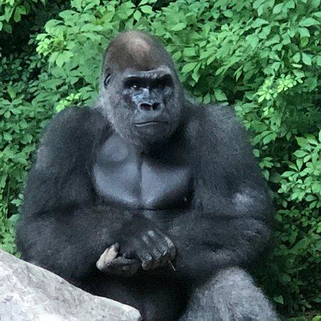 Bronx Zoo: photo0.jpg
