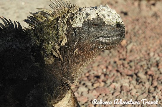 7 Tage Galapagos 3-Inseln-Tour