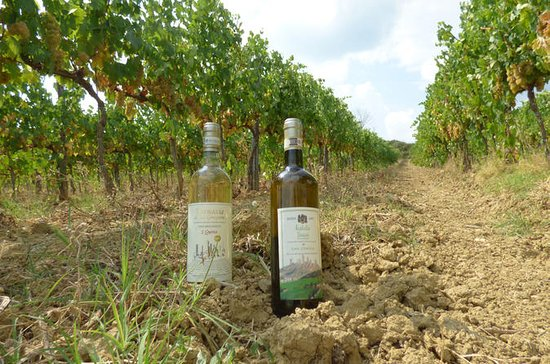 Dégustation de vins de San Gimignano...