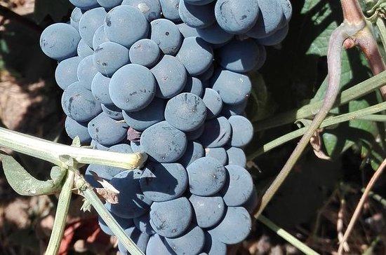 Visite privée de vin, d'huile d'olive...