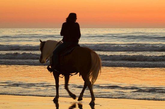 Enjoy 2 hours Horse beach ride in...