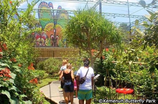 Cosmo Bali Tour: Kemenuh Butterfly...