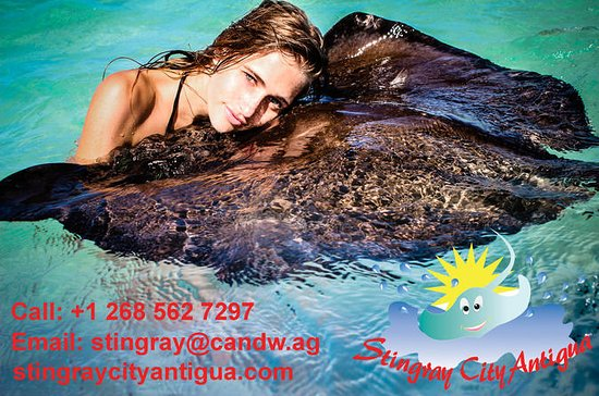 Southern Stingray Marine Animal Interaction and Snorkel