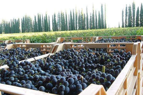 Bulgarian Harvest Experience