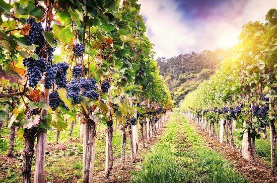 Dégustation de vins roumains