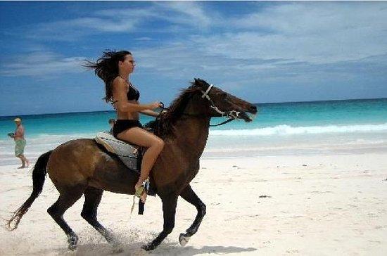 Horse and camel in agadir
