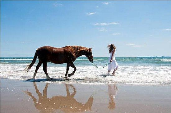 Cavalo e camelo no taghazout