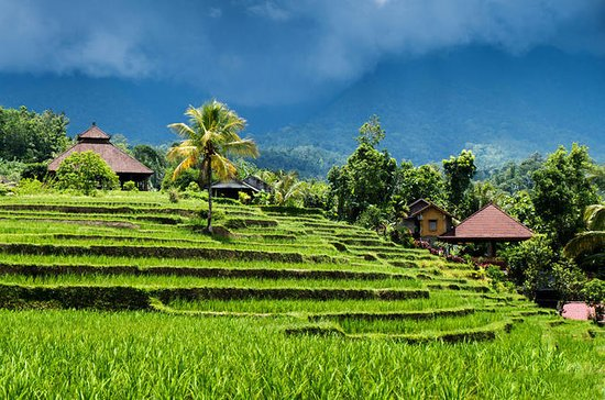 Cosmo Bali Package Tour: Bedugul...