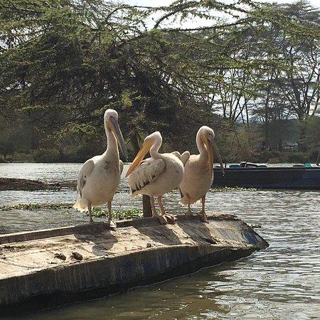Rift Valley Province, Kenya: photo0.jpg
