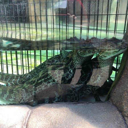 Atagawa Tropical U0026 Alligator Garden: Photo8