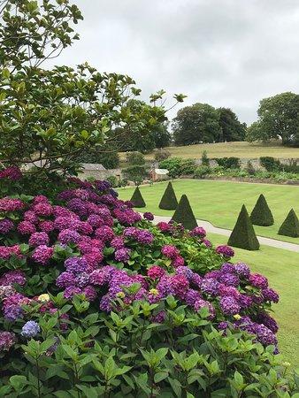 Plas Cadnant Hidden Gardens: Hydrangeas in full colour.