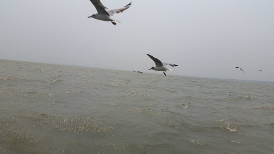 Chilika Lake: Seagull will loom around your boat if you feed them