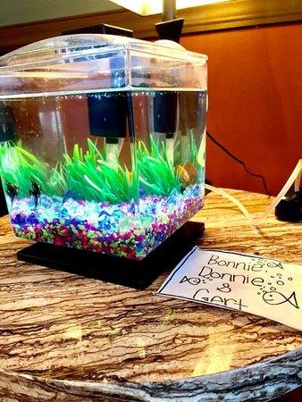 Sioux Center, Iowa: Friendly Fish